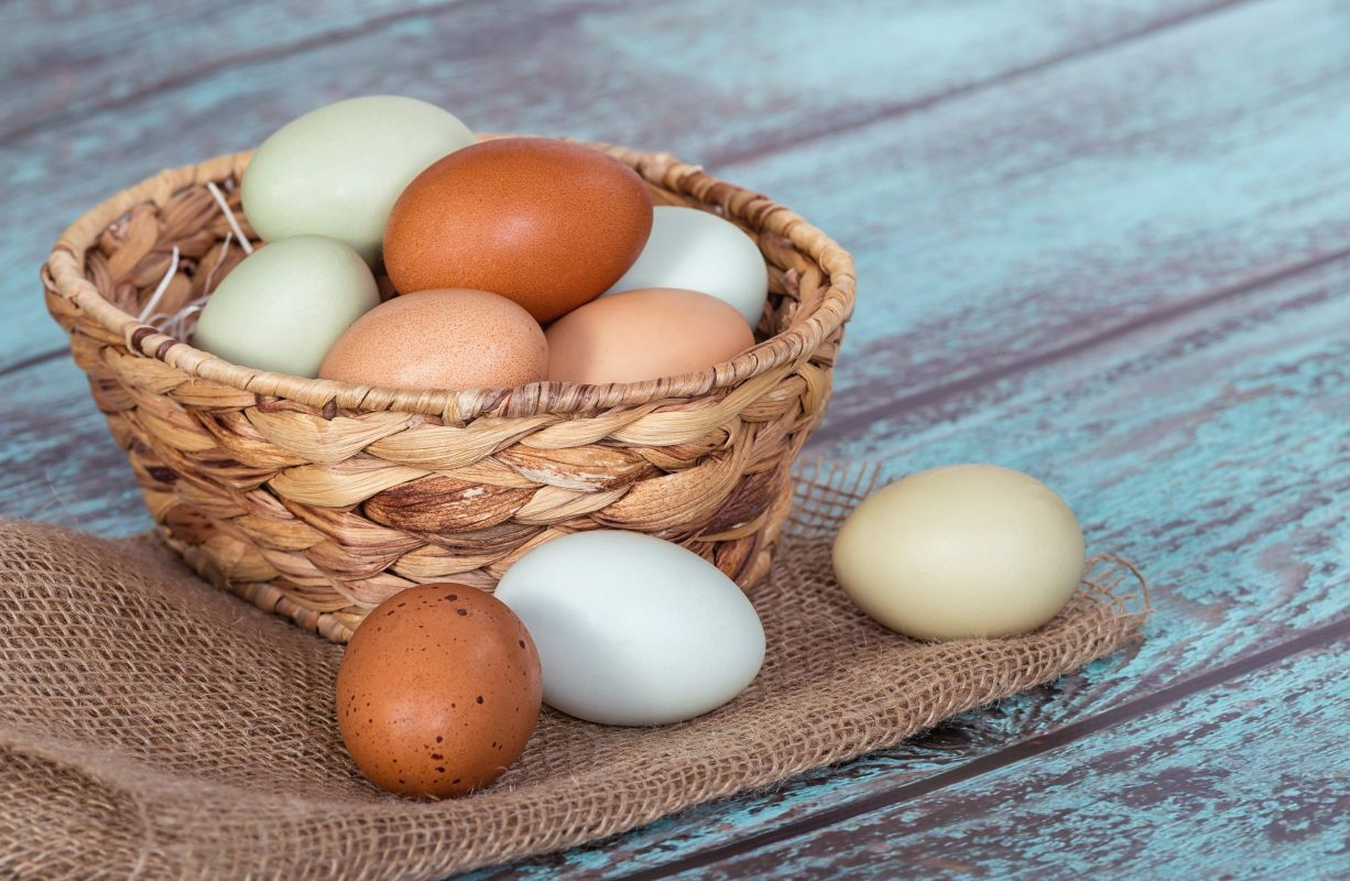 Complete Guide for Raising Backyard Chickens 6