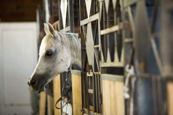 horse confined to a barn stall