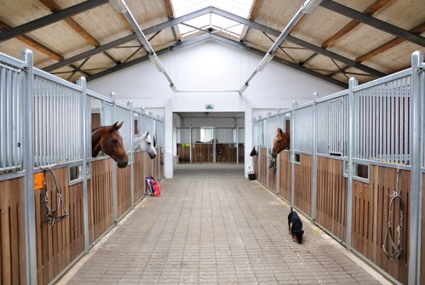 horses locked in barn stalls that does not have fresh air