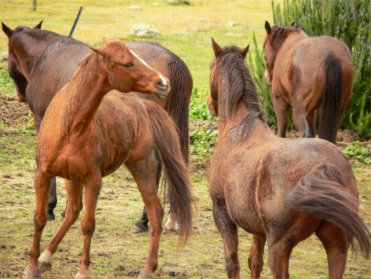 horses disagreeing in a pasture