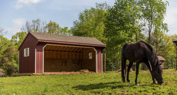 free roaming horse in front of horse shed