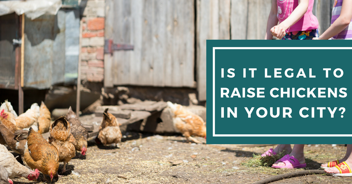 Complete Guide for Raising Backyard Chickens 8