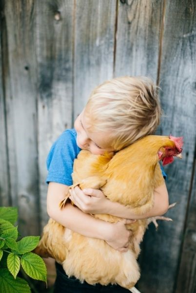 Complete Guide for Raising Backyard Chickens 17