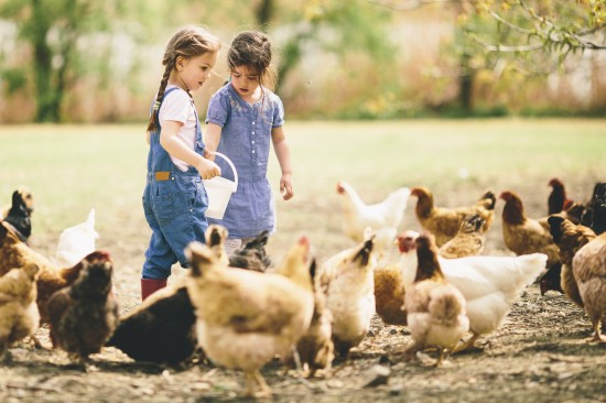 Complete Guide for Raising Backyard Chickens 5